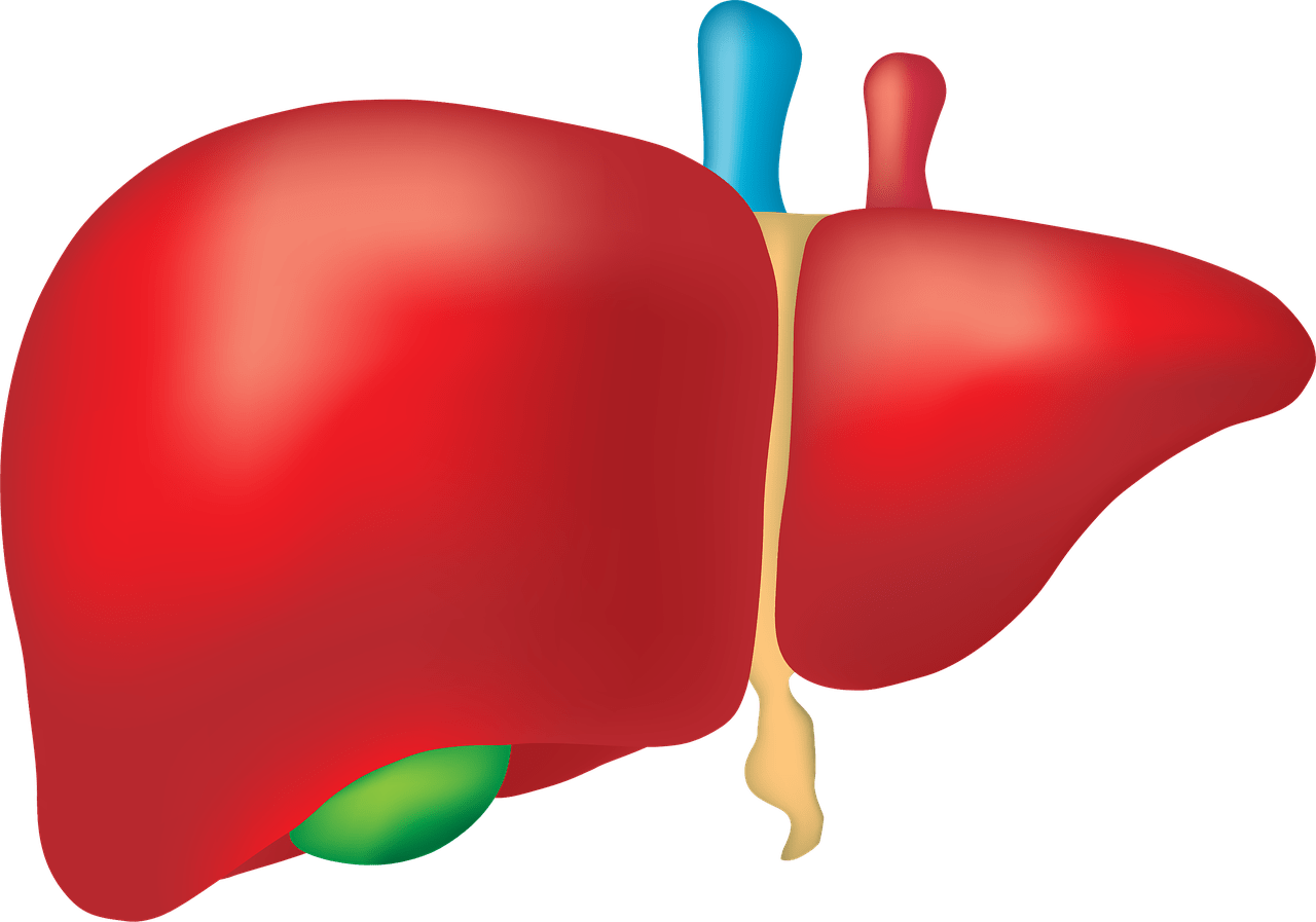 liver transplant surgery in india